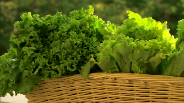 fresh organic lettuce in basket - see other clips from this shoot 1425 stock videos and b-roll footage