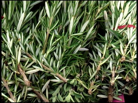 新鮮なオーガニックのローズマリー - ローズマリー点の映像素材/bロール