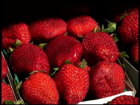 fresh organic strawberries - letterbox format bildbanksvideor och videomaterial från bakom kulisserna