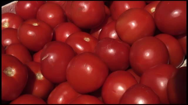(hd1080i 新鮮なオーガニックのトマト) - 豊富点の映像素材/bロール