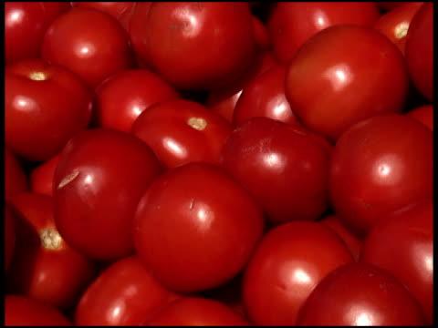 fresh organic tomatoes - letterbox format bildbanksvideor och videomaterial från bakom kulisserna