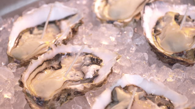 fresh oysters on ice in fish market. - oyster shell stock videos & royalty-free footage