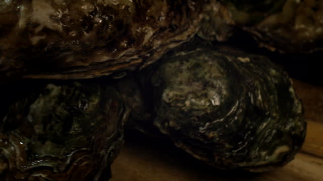 fresh oysters - seafood stock videos & royalty-free footage