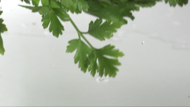 fresh parsley is falling on a white surface - parsley 個影片檔及 b 捲影像