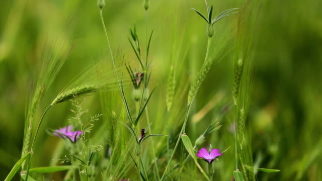 fresh pasture grass - earth goddess stock videos & royalty-free footage