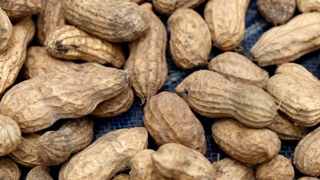 新鮮な落花生を乾燥させます。 - 食品 ピーナッツ点の映像素材/bロール