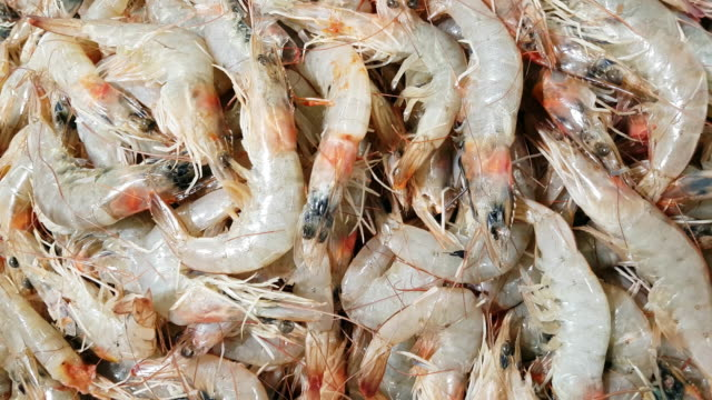 fresh prawns on fish market display - crustacean stock videos & royalty-free footage