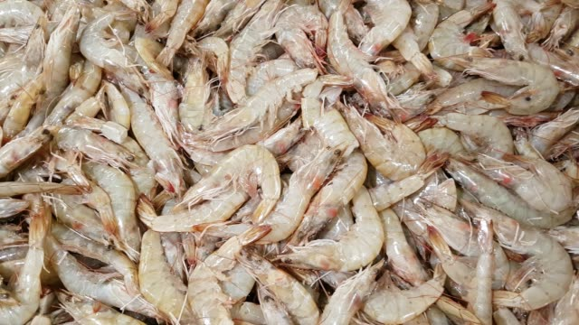 fresh prawns on fish market display - prawn animal stock videos and b-roll footage
