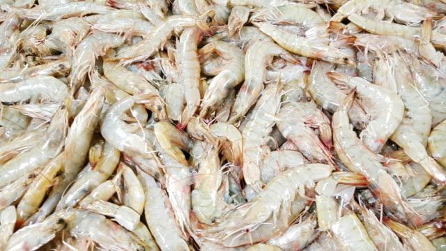 魚市場のディスプレイ上の新鮮なエビ - prawn animal点の映像素材/bロール