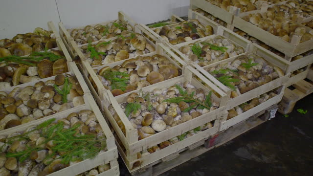 Fresh Produce refrigerated room in Italy store, Venezia