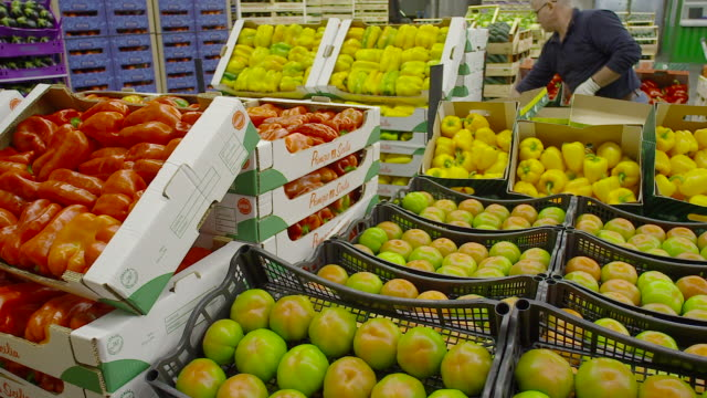 fresh produce refrigerated room in italy store, venezia - storage compartment stock videos & royalty-free footage