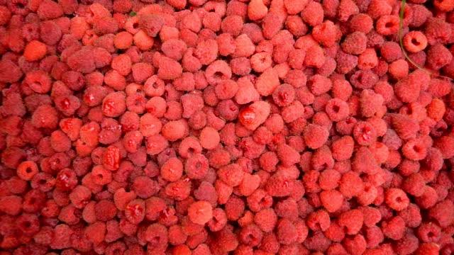 vídeos de stock, filmes e b-roll de framboesas vermelhas, frutas de fundo - framboesa