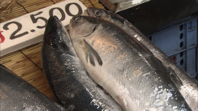 stockvideo's en b-roll-footage met fresh red salmon are displayed for sale at a seafood market - middelgrote groep dingen