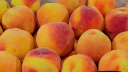 DOLLY: Fresh ripe peaches ready for sale