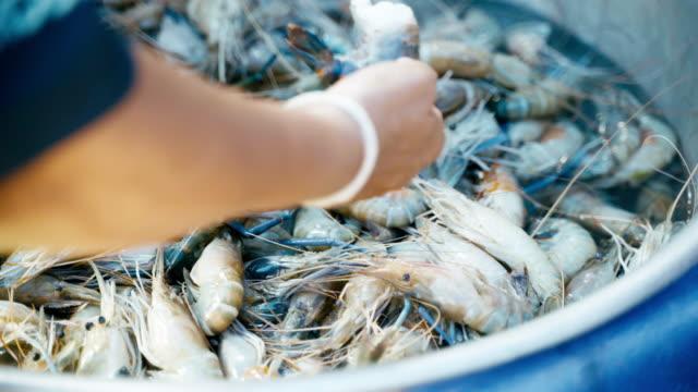 vídeos de stock, filmes e b-roll de frutos do mar frescos de camarão fluvial à venda no mercado de peixes. - tropical
