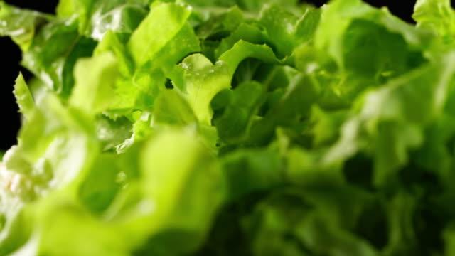 fresh salad leaf. lettuce - crunchy stock videos & royalty-free footage