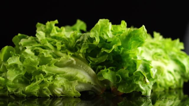 vídeos de stock, filmes e b-roll de folha de salada fresca. alface - crocante