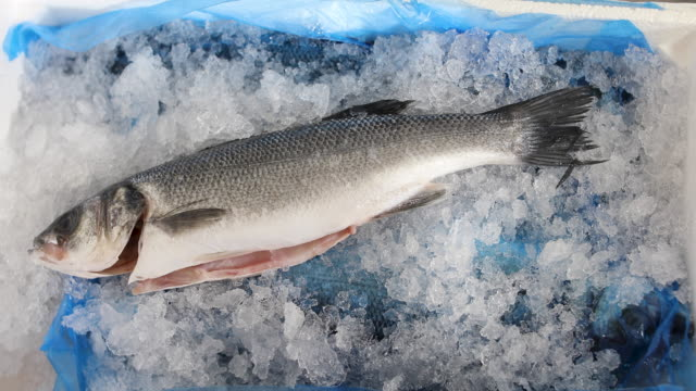 fresh sea bass fish in the plastic container - sea bass stock videos & royalty-free footage