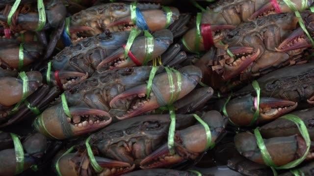 市場で新鮮な海のカニ。 - カニ捕り点の映像素材/bロール