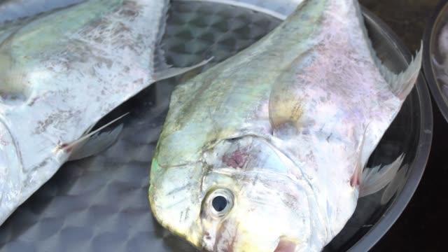 氷の上の新鮮な海の魚は、市場で販売されています - 獲った魚点の映像素材/bロール
