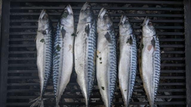 新鮮な海の魚 - 獲った魚点の映像素材/bロール