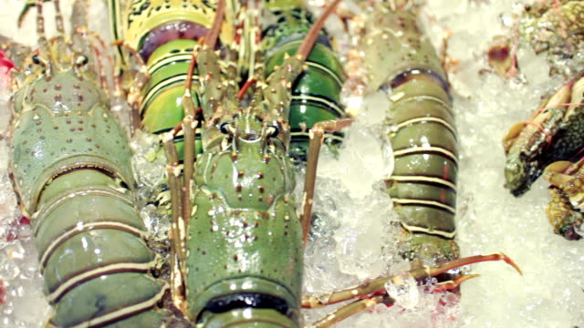 fresh seafood on ice,dolly shot - prawn animal stock videos and b-roll footage