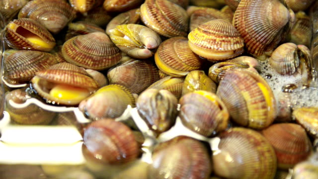 Fresh shells on Fish market