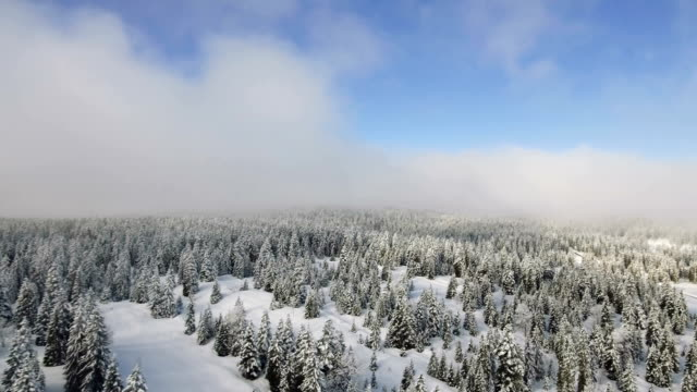 Fresh Snow on the forests of the Jura Mountains.