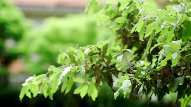 新鮮な春の葉 - 青々とした点の映像素材/bロール