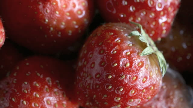 CU T/L Fresh strawberries rapidly decaying to grey mold