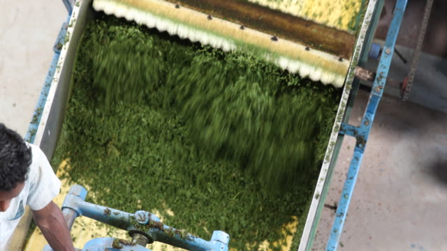 fresh tea leaves passing through a rotating machine. darjeeling tea is a tea from the darjeeling district in west bengal, india. unlike most indian... - dried tea leaves stock videos & royalty-free footage