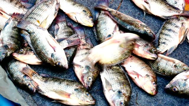 frischen tilapia fisch auf dem markt. - zuletzt stock-videos und b-roll-filmmaterial