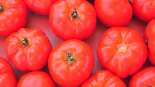 vídeos de stock, filmes e b-roll de tomate fresco - tomato