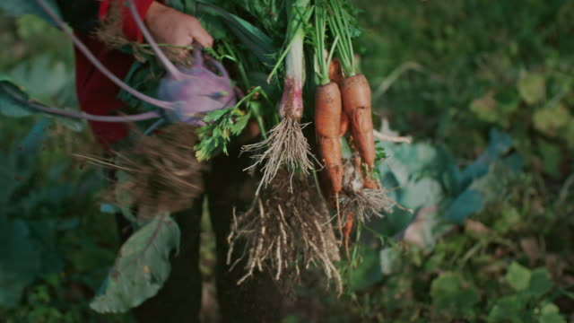 fresh vegetable in woman hands - parsley stock videos and b-roll footage