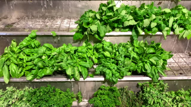 fresh vegetables with water in supermarket - parsley stock videos and b-roll footage