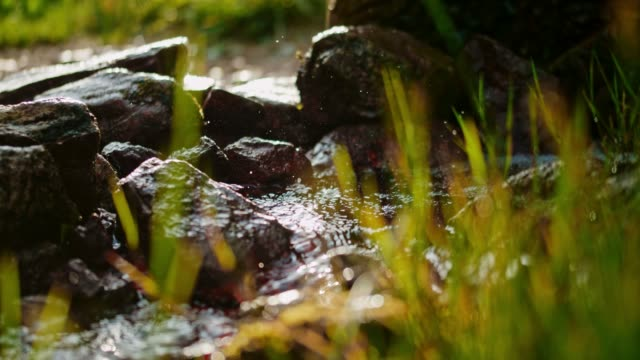 ms fresh water flowing among rocks - moss stock videos & royalty-free footage
