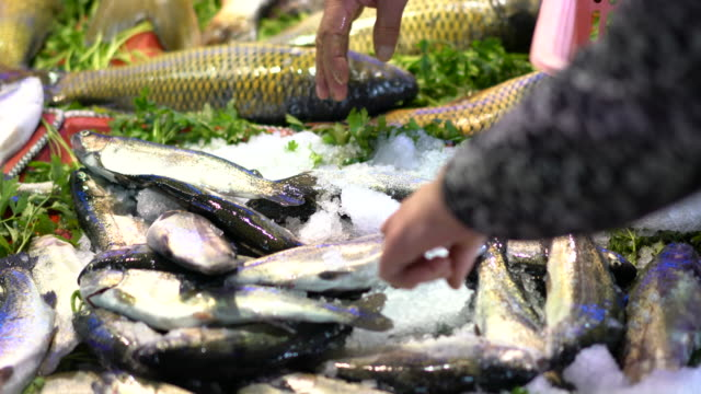 freshly carp fishes at fish market - fish market stock videos and b-roll footage