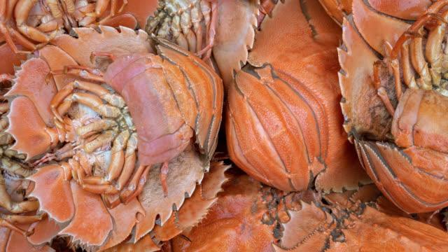 freshly caught australian balmain bugs - fishing industry stock videos & royalty-free footage