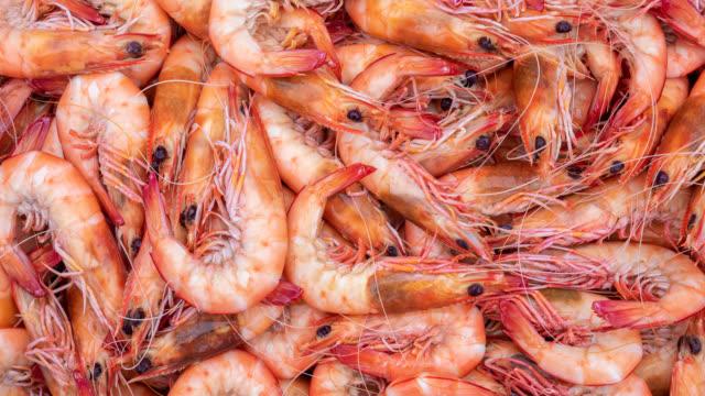 freshly caught australian prawns - shrimp seafood stock videos & royalty-free footage