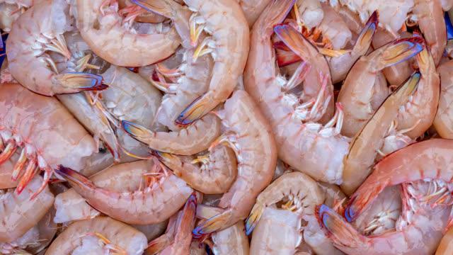 vídeos de stock e filmes b-roll de freshly caught australian prawns - captura de peixe