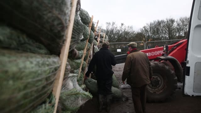 Freshly cut Christmas trees sit in pallets as they wait to be loaded at the Santa Fir Christmas Tree Farm near Guildford UK on Monday Dec 7 2015
