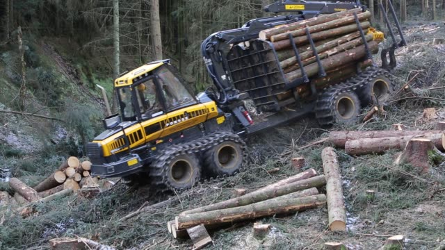 freshly cut timber in grizedale forest, lake district, uk, being hauled to the roadside by an atv. - evergreen stock videos & royalty-free footage