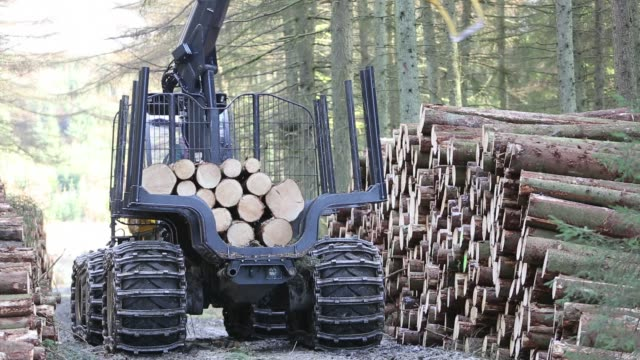 Freshly cut timber in Grizedale forest, Lake District, UK, being hauled to the roadside by an ATV.