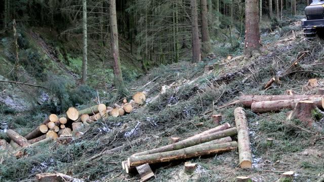 Freshly cut timber
