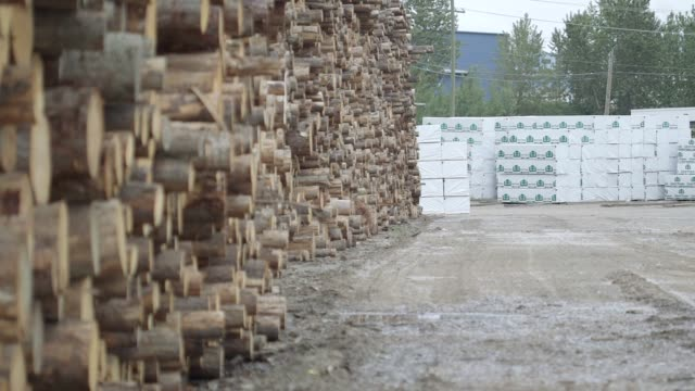 freshly cut trees sit stacked at the west fraser timber co. sawmill in quesnel, british columbia, canada on june 5, 2015. shots of: wide shots and... - timber stock videos & royalty-free footage