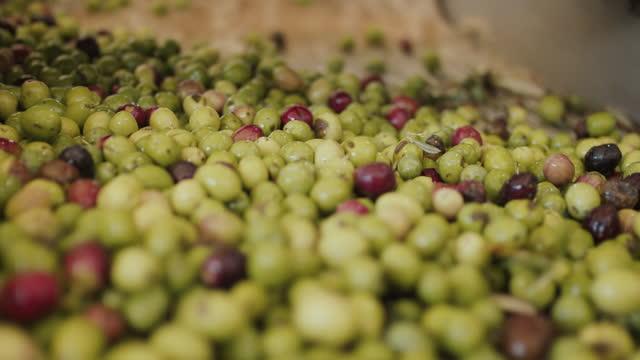 freshly harvested olives spilling off conveyor belt - fruit stock videos & royalty-free footage