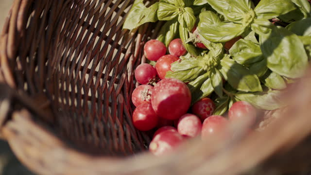 freshly picked tomatoes dropping into basket with basil - tomato video stock e b–roll