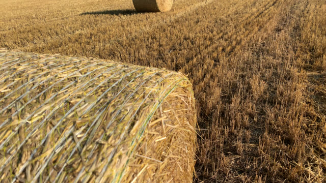 freshly rolled hay bale or haystack in closeup in a hay field - bale stock videos & royalty-free footage