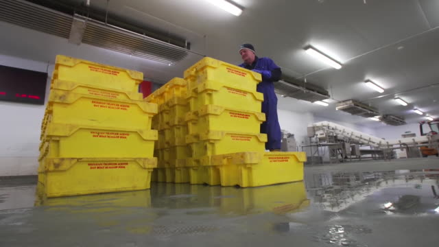vídeos de stock, filmes e b-roll de freshlycaught scallops being sorted at brixham harbour - indústria da pesca