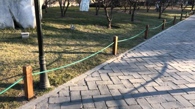 鮮度公園 ming 王朝壁遺跡公園、北京、中国。 - winter点の映像素材/bロール